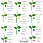 Essential Oil Uses by Two Thirty~Five Designs